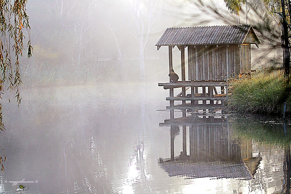 Misty Morning at The Zoo by Maggiebee