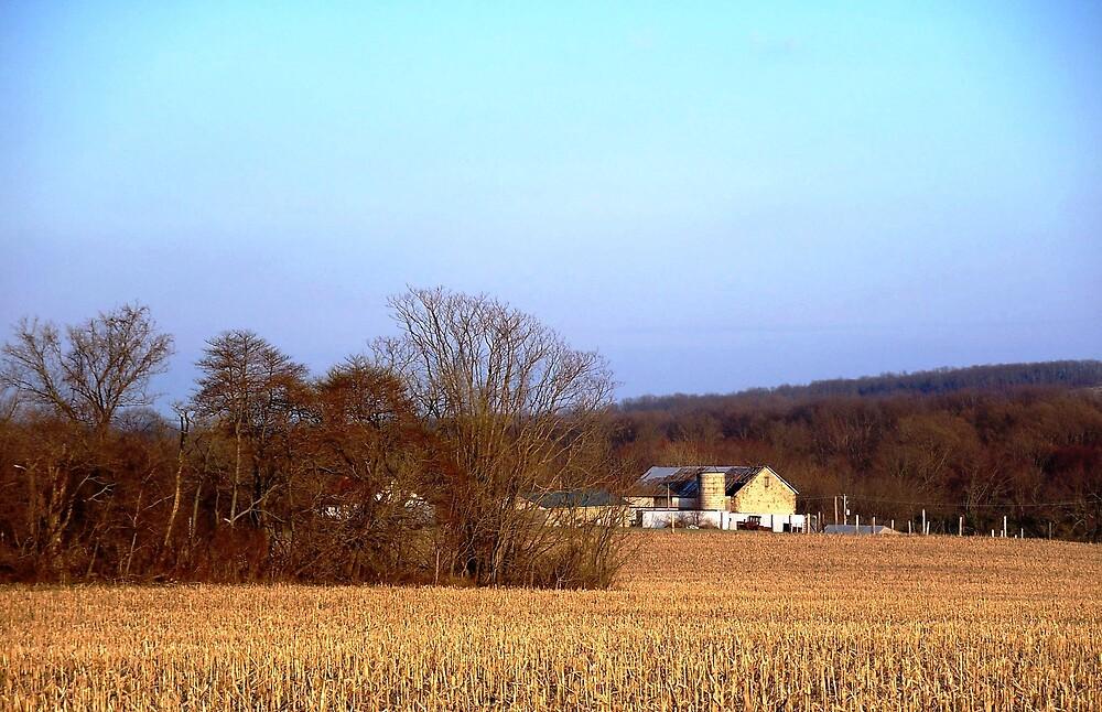 Grain Field by Judi Taylor