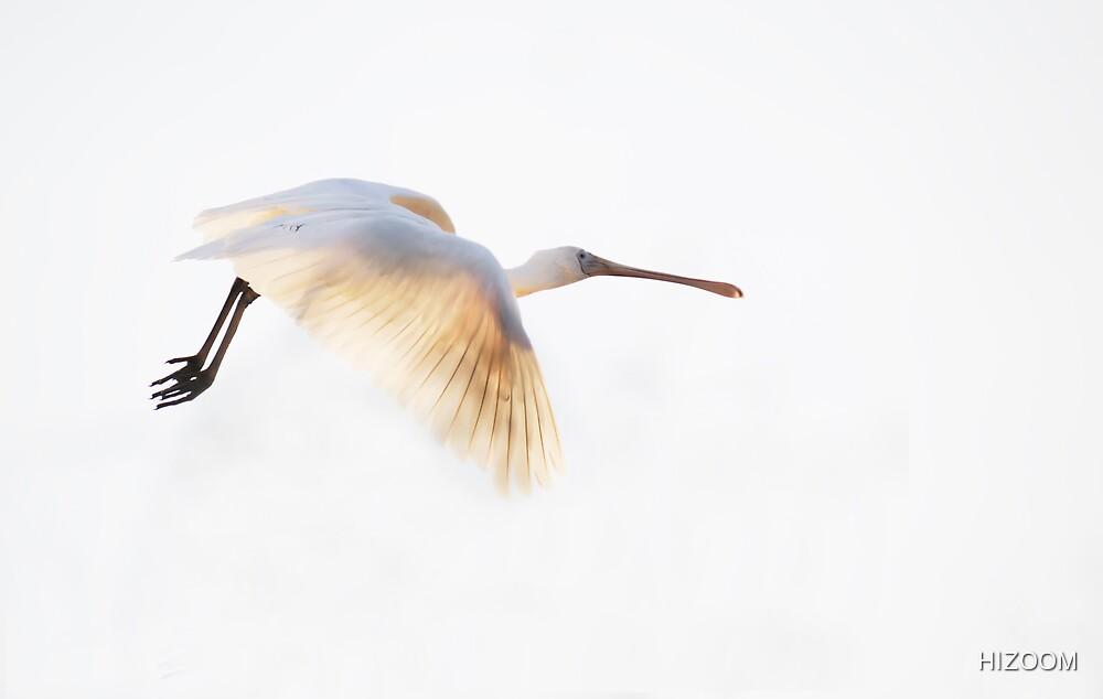 Spoonbill In Flight by HIZOOM