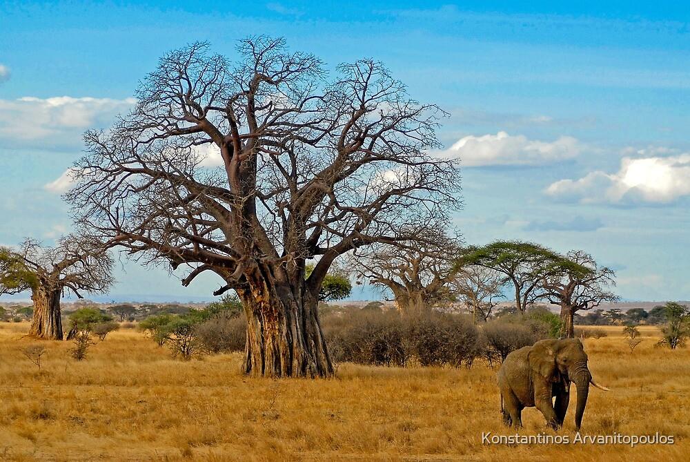 Baobab Tree (Adansonia digitata) by Konstantinos Arvanitopoulos