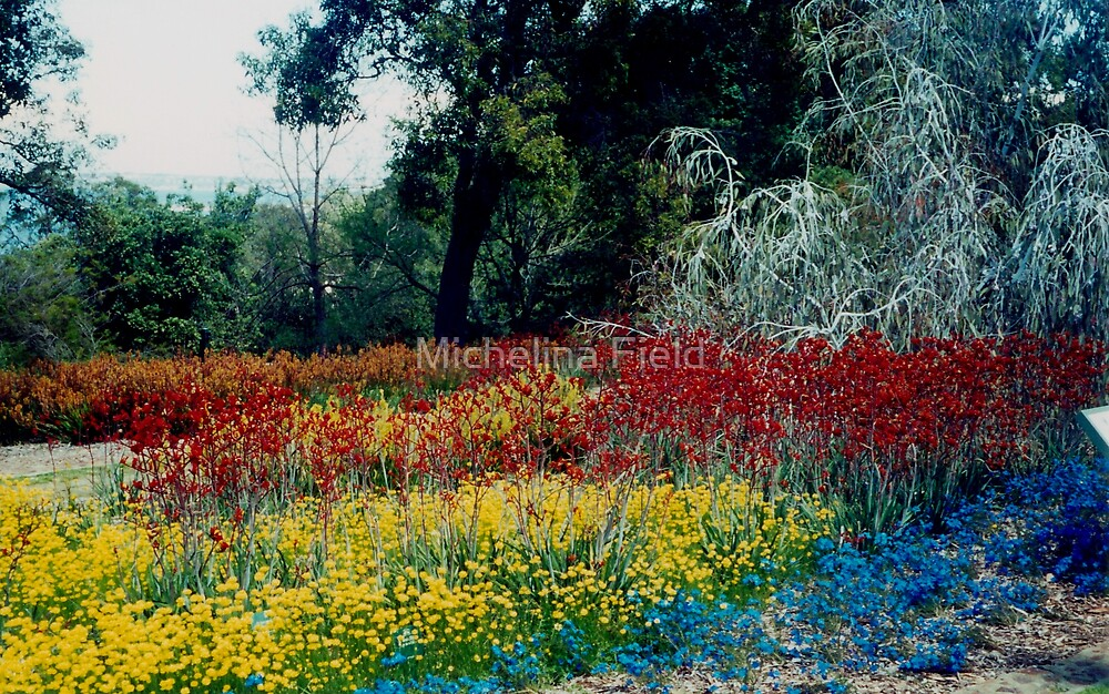 Wildflowers at King's Park Western Australia Wildflower festival by Michelina Field