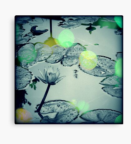 Dance of the Firefly Canvas Print