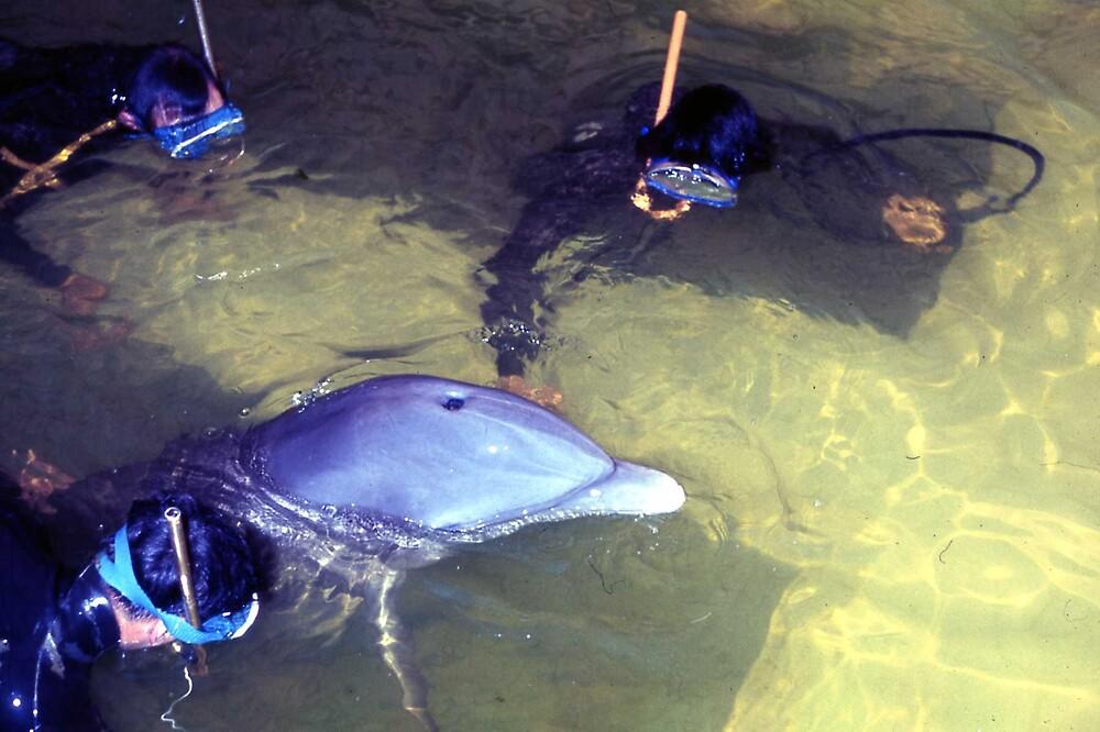 Dolphin Watch by MayWebb