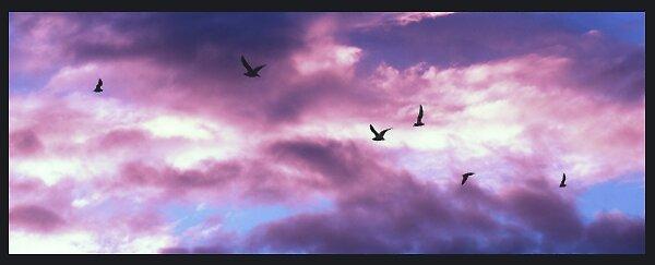 birds. by caitlynnn