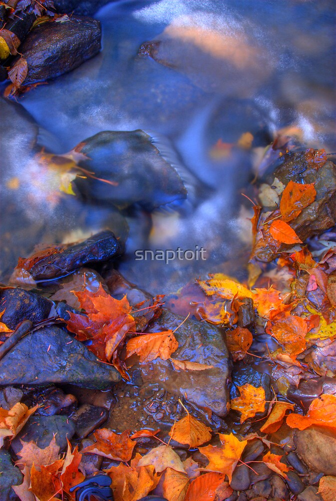 River Leaves by snaptoit