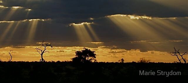Streaks of light by Marie Strydom