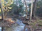 Malone's Creek by Cathy Jones