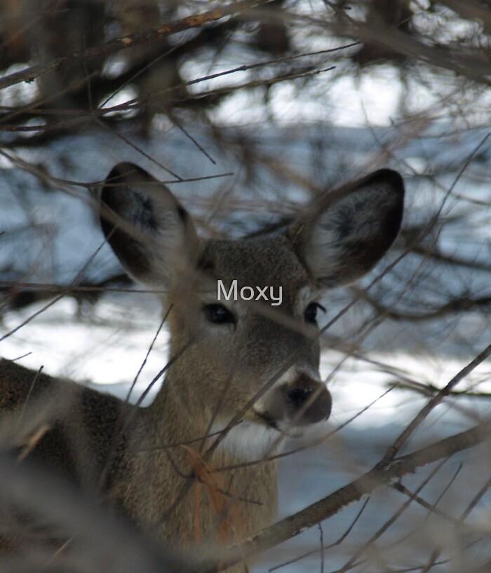 Hello Deer by Moxy