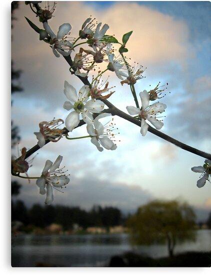 serene beauty by gabryshak