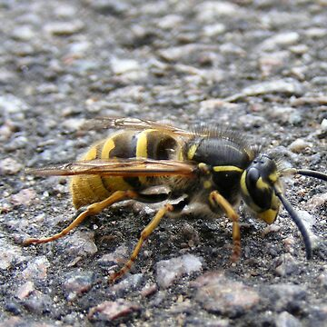 Wasp by peyote