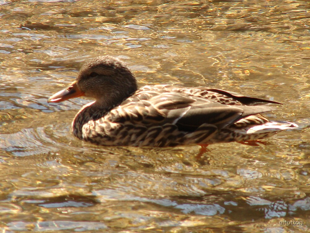 Out For A Sunny Swim by eltotton