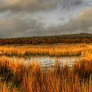 Reed Pond, Bodmin Moor by Caroline Bland