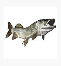 Toothy muskie Photographic Print