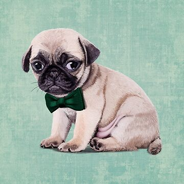 Angry Pug by Sparafuori