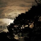 Backlit by MikeThomas