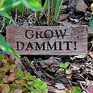 Gardening Directions #2 by Susan  Bergstrom