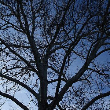 Tree at Dusk by jennabee25