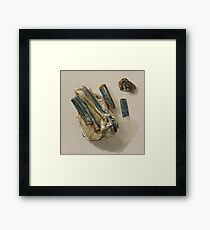 Natural History Turquoise Framed Print