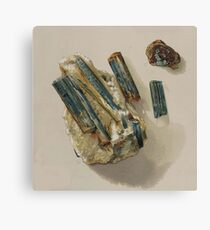 Natural History Turquoise Canvas Print