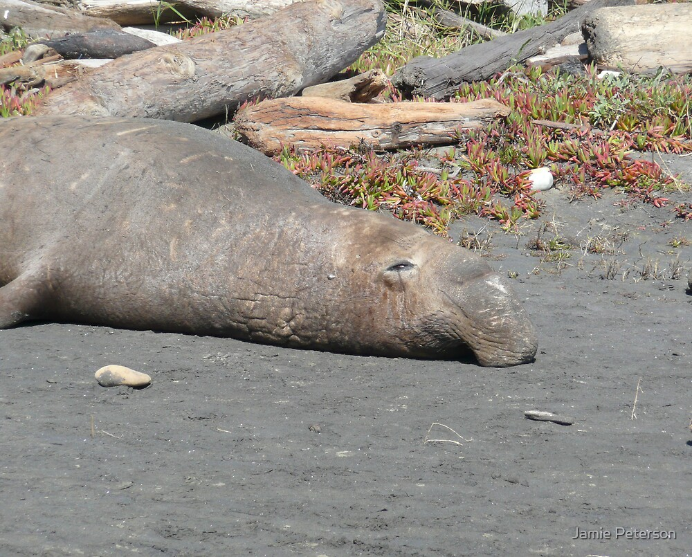 Napping at Low-Tide by Jamie Peterson