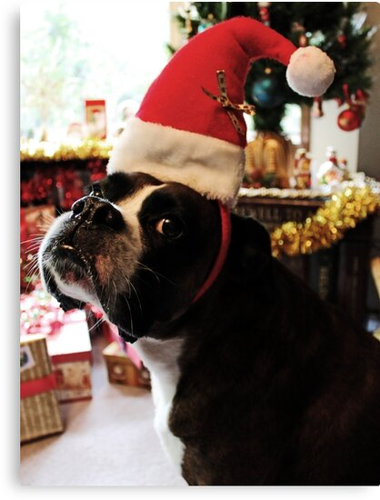 Arwen on Christmas Day  -Boxer Dogs Series- by Evita