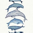 """""""Rare Cetaceans"""" by artist Amber Marine ~ (Copyright 2017) Watercolor dolphins and porpoises, © 2017 - Vaquita, irrawaddy, maui's, humpback, finless, baiji by Amber Marine ~ Wildlife Artist ~ © 2004-2019"""