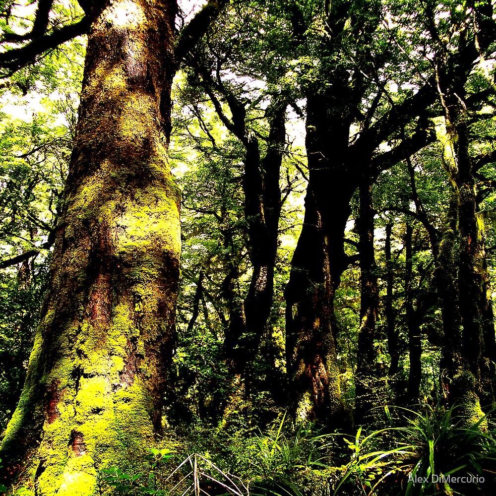 Milford Beech Forest by Alex DiMercurio