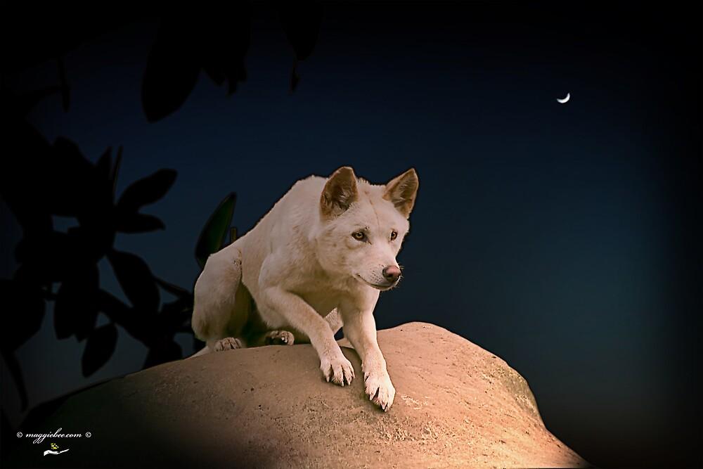 Australian Dingo at Night by Maggiebee