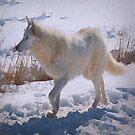 """""""Einsamer weißer Wolf"""" von OLena  Art ❣️"""