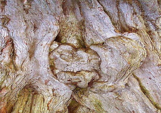 Tree Dweller by Karsten Stier