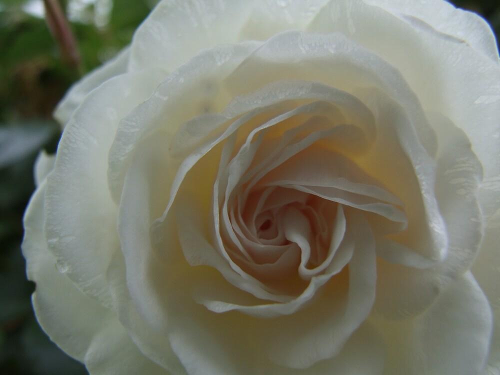 Softness by Linda Sass