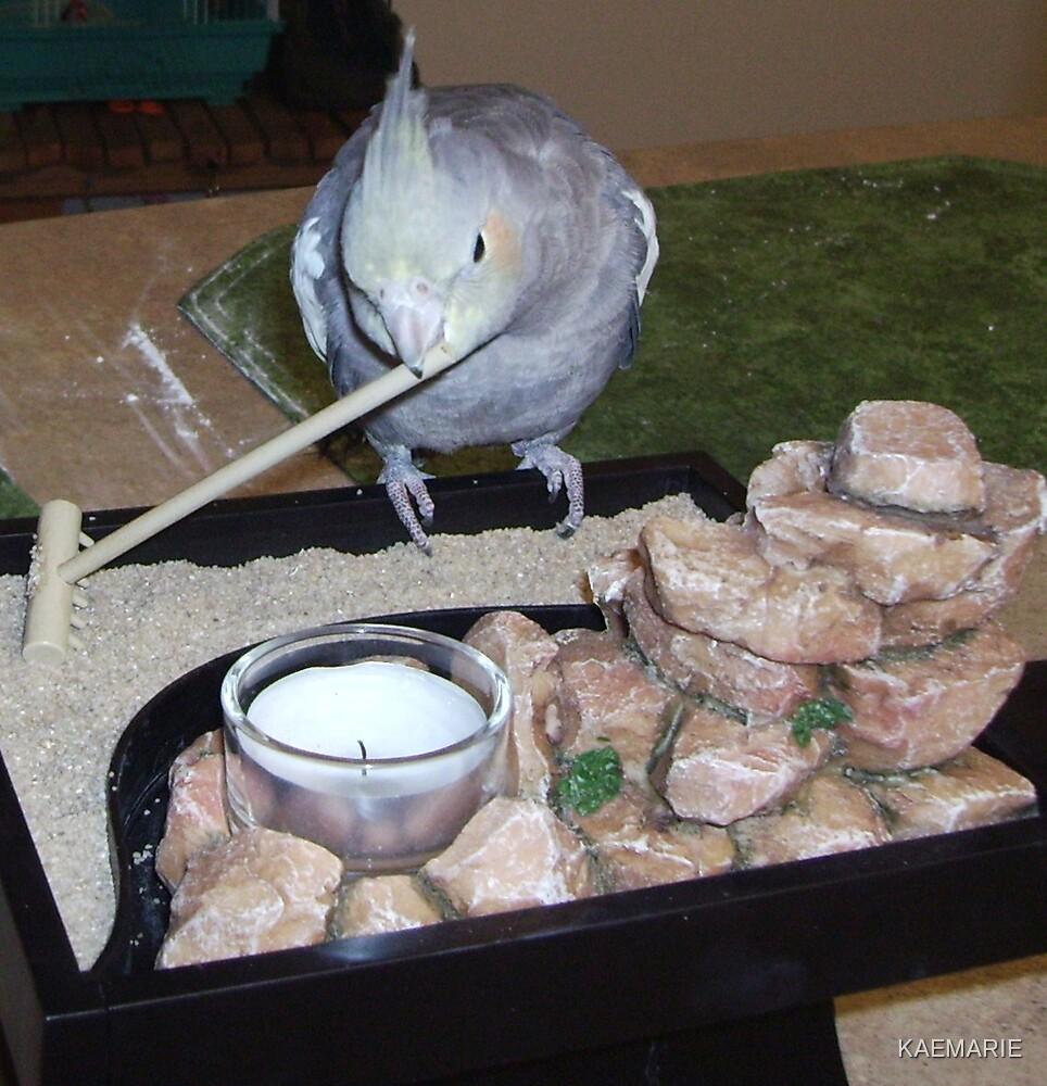NIKOLI CLEAINGG HIS LITTLE RESORT by KAEMARIE