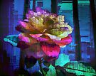 A Rose of Many Colours by yolanda