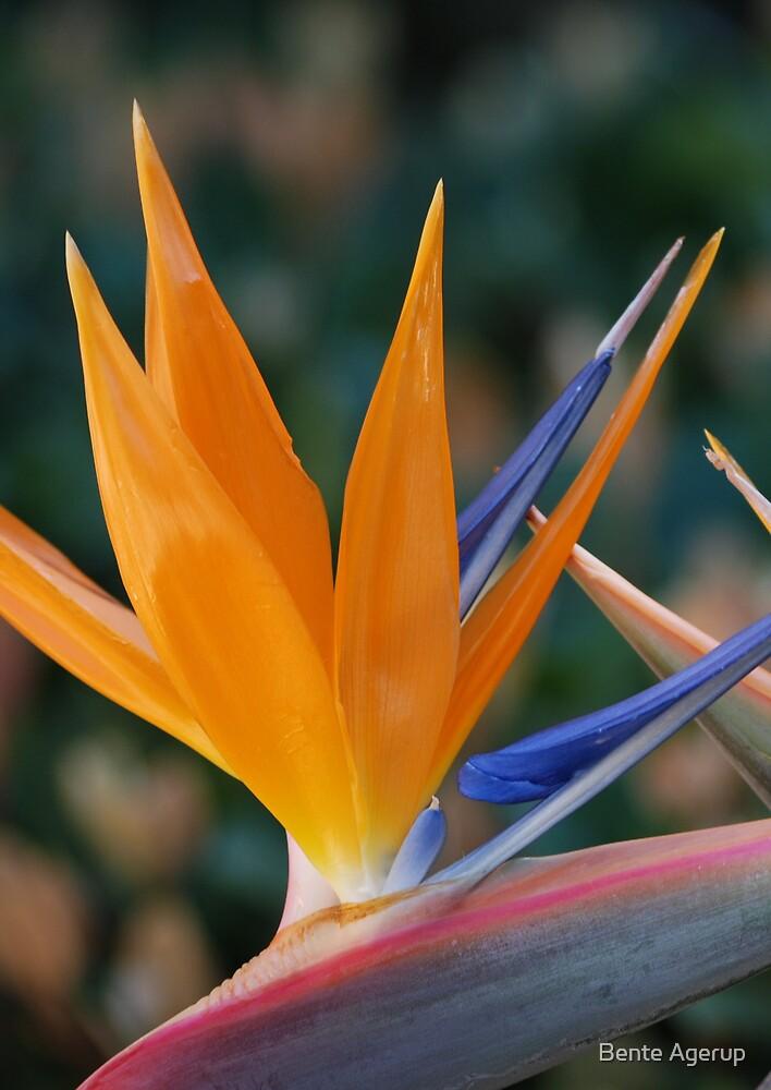I like the colour by julie08