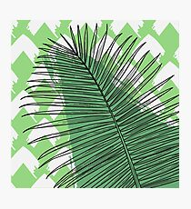 Tropicalia - Palm in Green Photographic Print