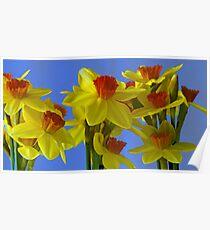 A parade of Daffodills Poster