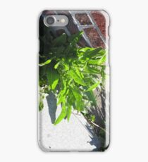 Growing from the Cracks iPhone Case/Skin