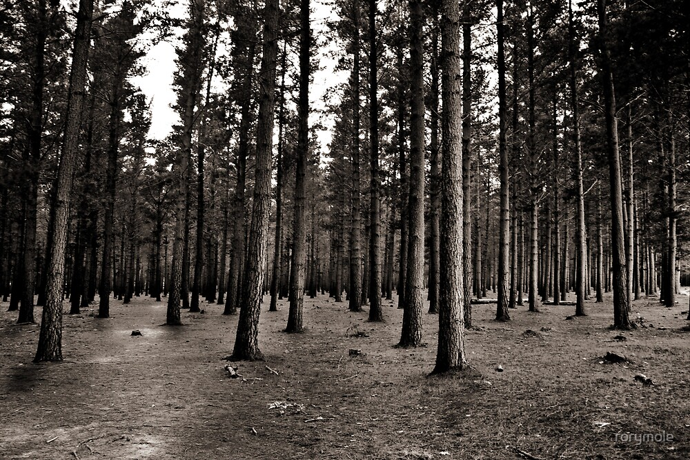 The edge of the forest by rorymole