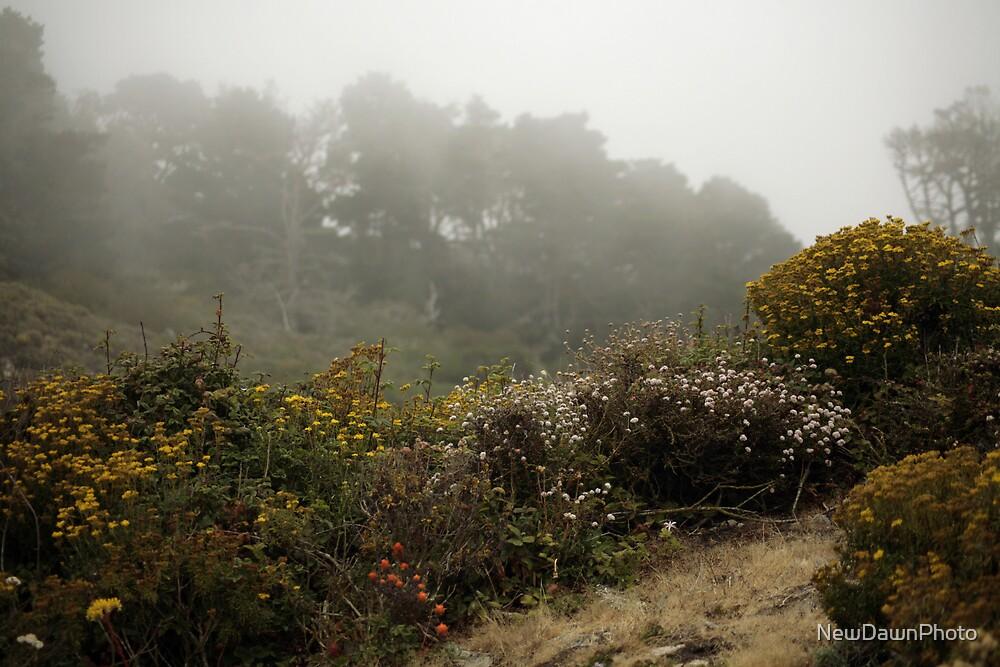 Coastal Flowers by NewDawnPhoto