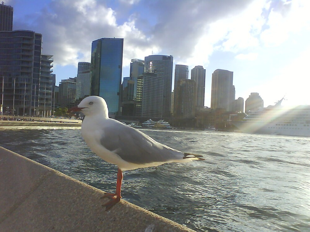 Seagull and the City by pinklioness