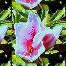 Pretty Pink Fab Flower by KazM