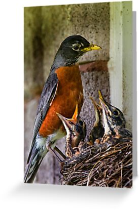 American Robin And Nest by Michael Cummings