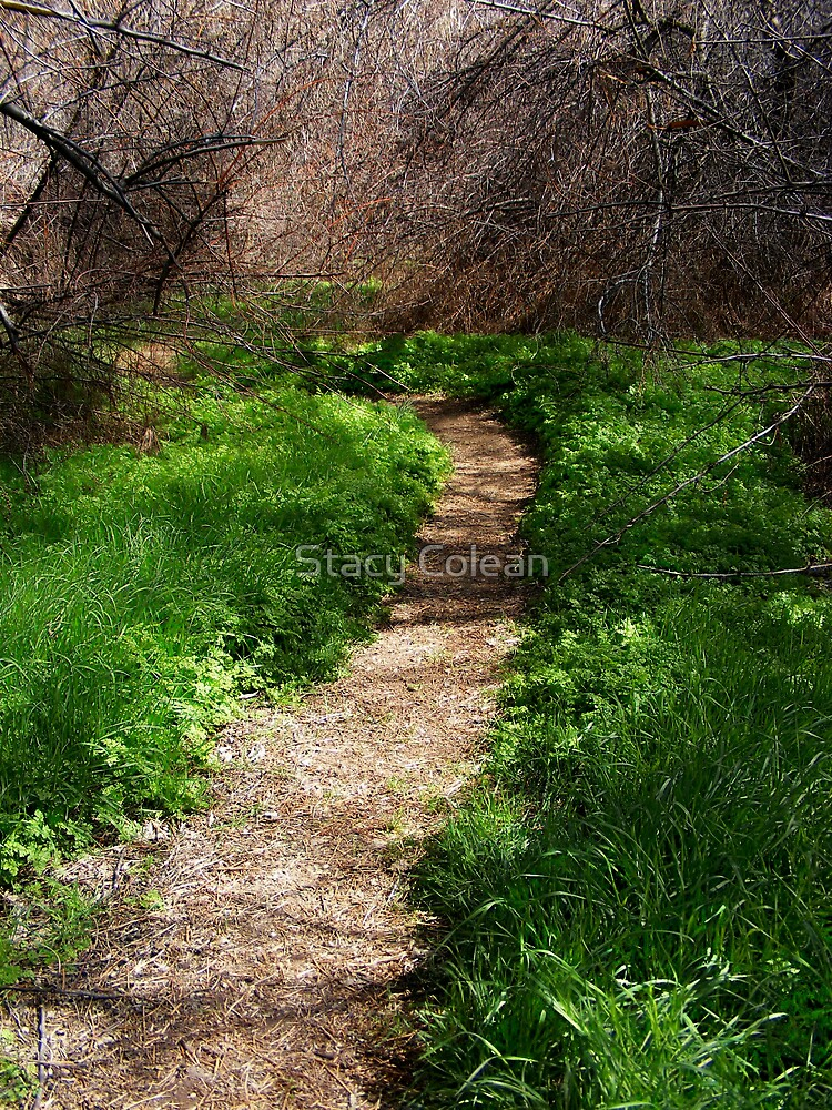 Green Path by Stacy Colean