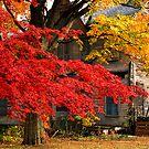 Autumn in Aberdeen (NJ) by halnormank