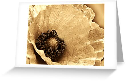 SEPIA COLLECTION ~ POPPY ~ PASTEL AND PENCIL ON CANVAS by LacewingDesign