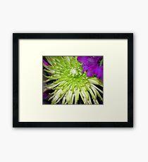 Blooms Framed Print