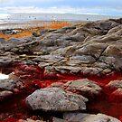 Red Algae by Gene Praag