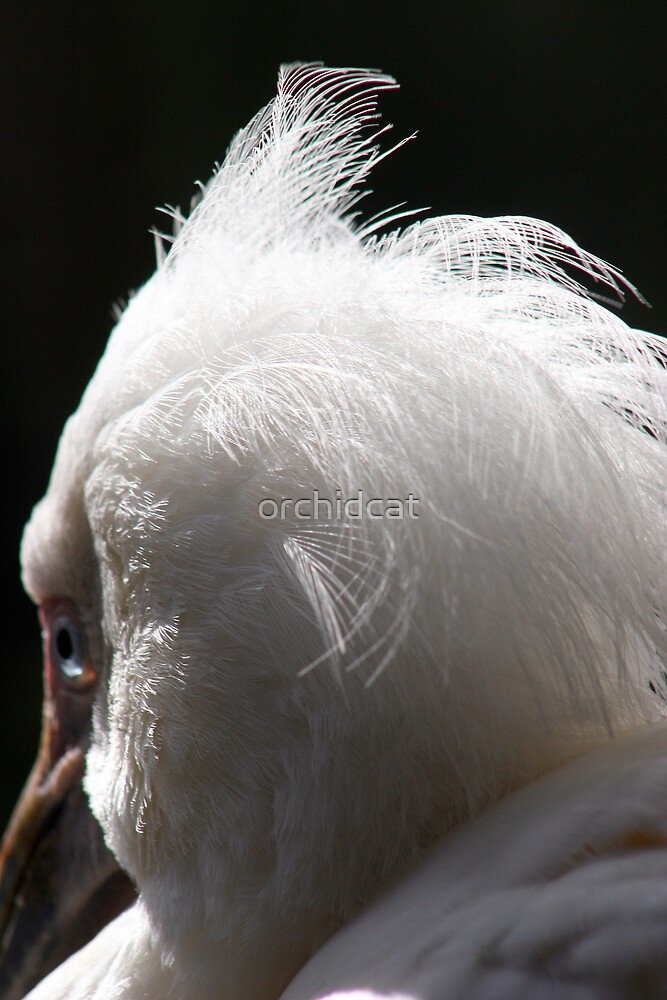 Feathered friend by orchidcat