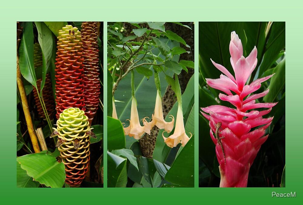 Tropical trio by PeaceM