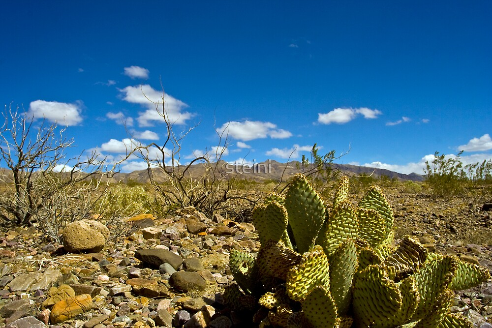 Cactus in Death Valley by steini